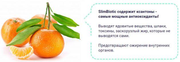 состав SlimBiotic