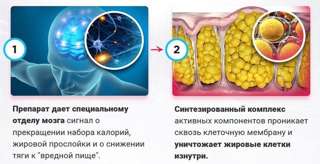 Как действует НейроСистема 7 1